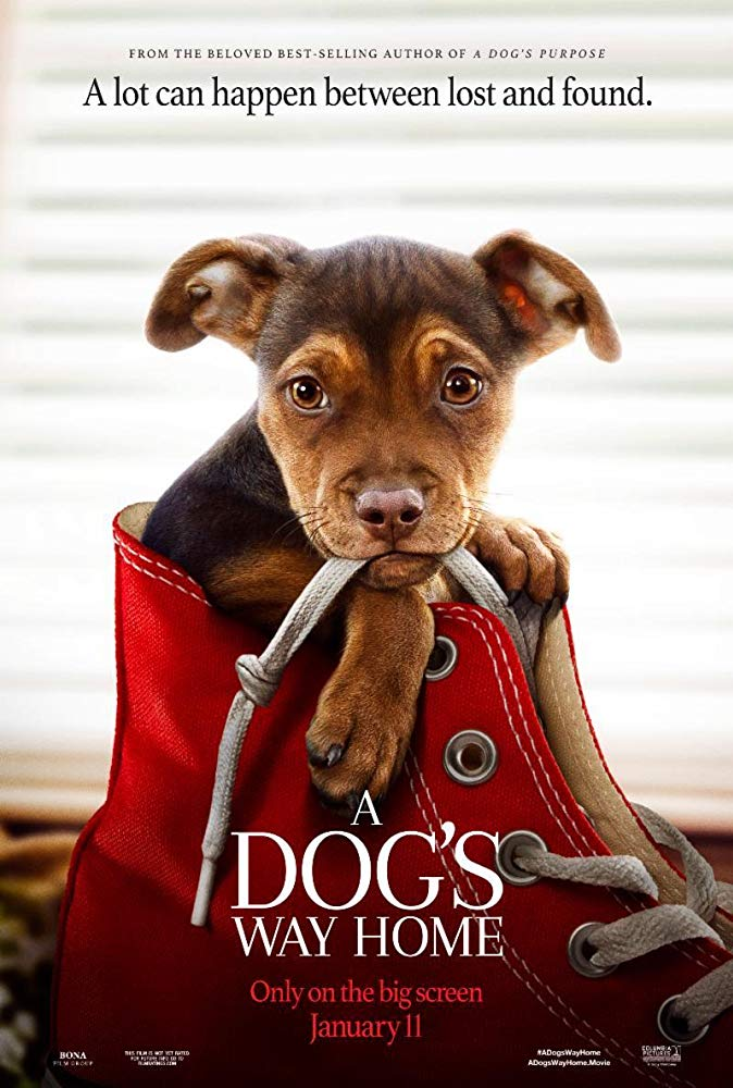 A Dog's Way Home (2019) Online Subtitrat in Romana